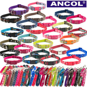 Fashion Collars & Leads